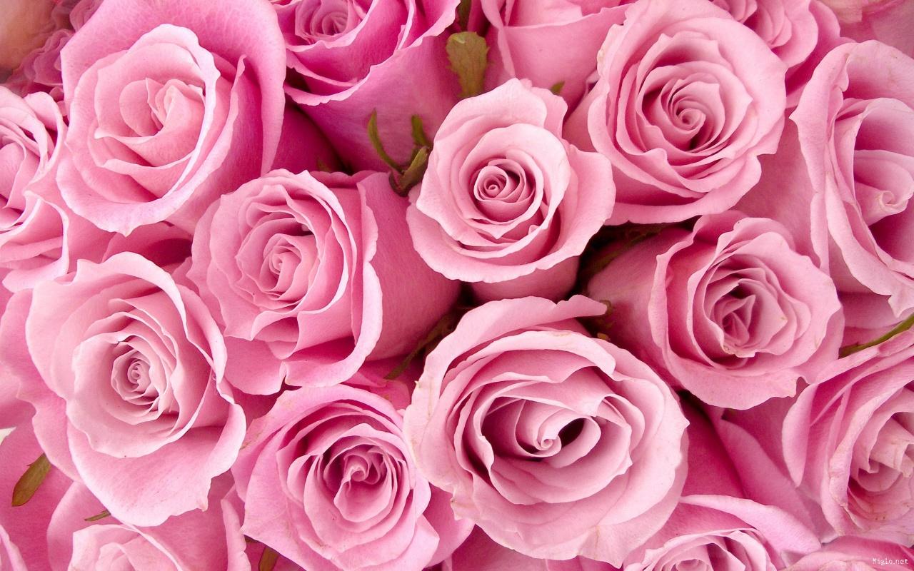 ✿ Chez Jolies Fleurs! - Bandeau 1