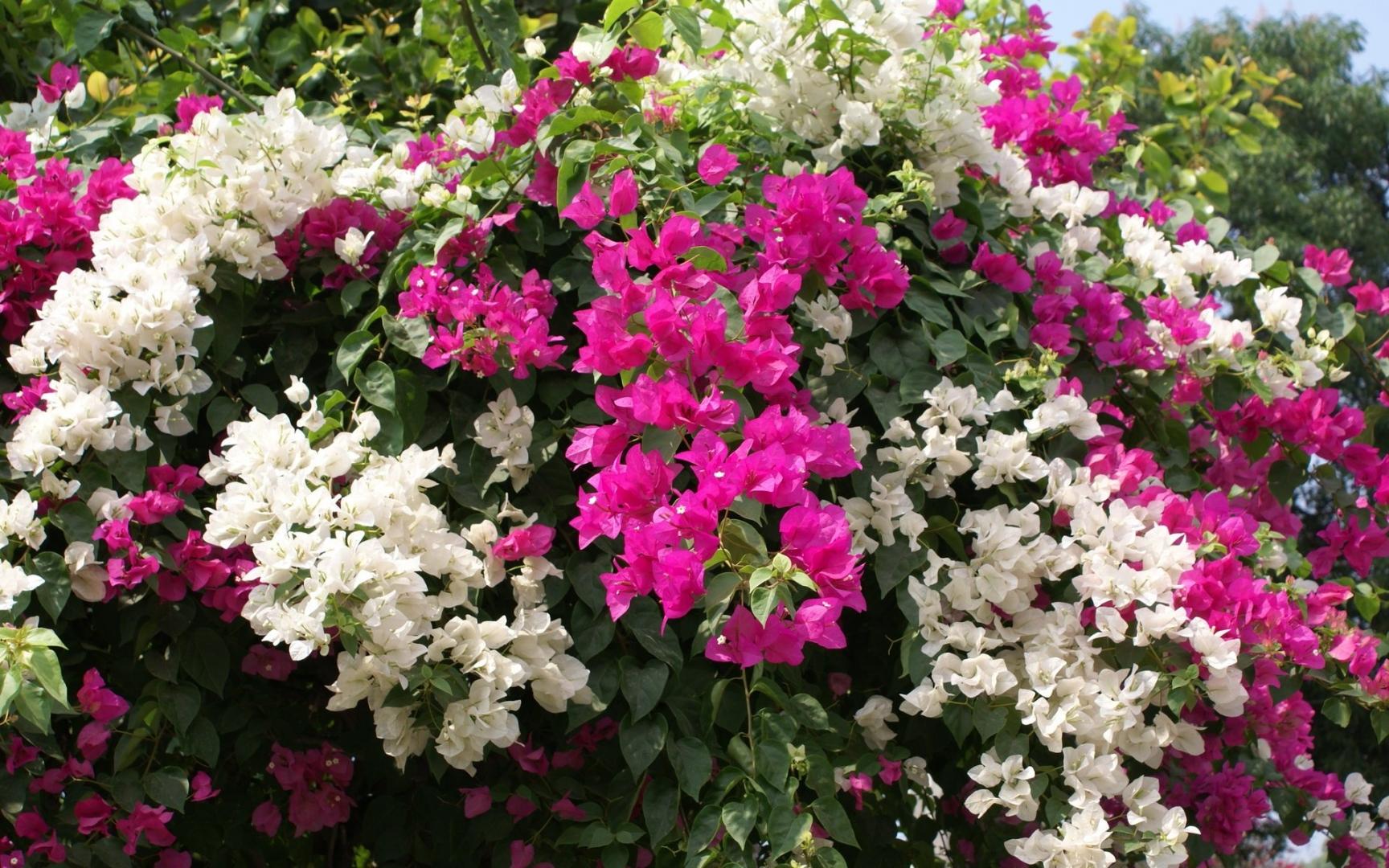 ✿ Chez Jolies Fleurs! - Bandeau 3