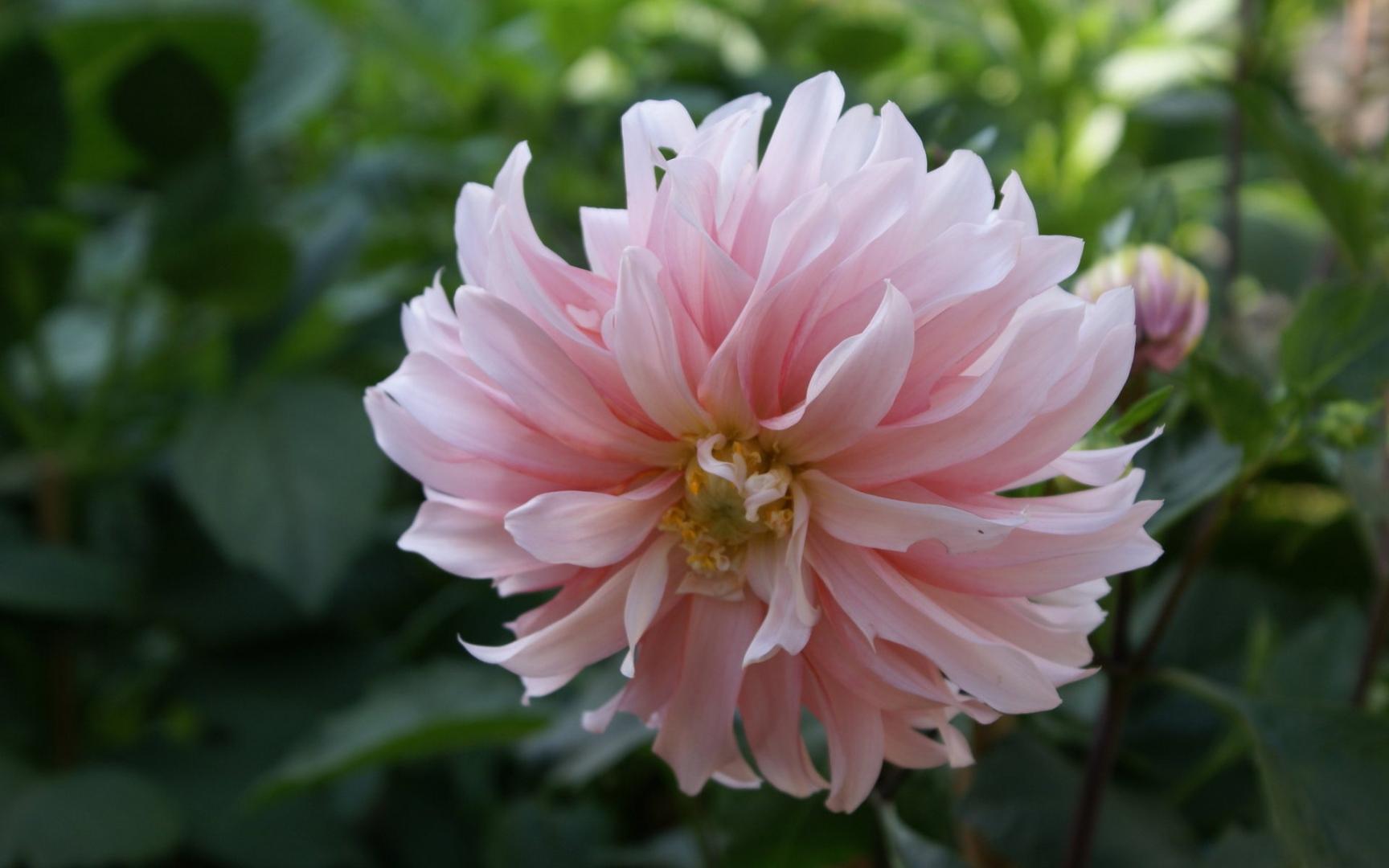 ✿ Chez Jolies Fleurs! - Bandeau 5